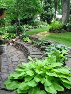shade garden/this tiered idea with stones makes steps and seating, great for those septic tank humps......