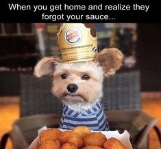 If you are feeling sad during the afternoon, this daily afternoon funny picdump 128 will change your mood. Check out 29 hilarious pictures that will make you happy. Funny Animal Pictures, Funny Photos, Funny Animals, Cute Pictures, Cute Animals, Funniest Photos, Dog Pictures, Memes Humor, Funny Memes