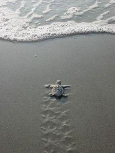 So wanna go to the beach......love sea turtles