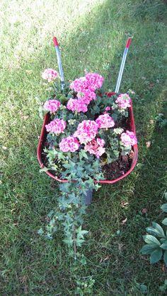 Narrin tontilla: Kottikärryt kukkii