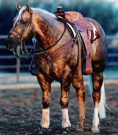 STUNNING Roping Horse, He seriously has my entire horse-wish-list, right down to the tack!