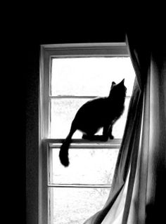 a cat and its window