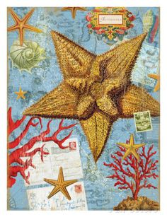 Vintage Botanical Starfish Print Posters by Bessie Pease Gutmann at AllPosters.com