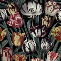 MTG Wallpaper Tulipa Dark WP20177