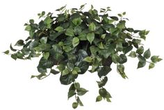 House of Silk Flowers Artificial Philo Ledge Plant *** Be sure to check out this awesome product.