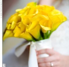 All yellow calla lilies for the bridesmaids