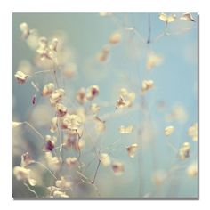 """Found it at Wayfair - """"Little Secrets"""" by Beata Czyzowska Young Photographic Print on Wrapped Canvas"""