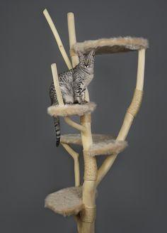 kattenmeubel / kattenboom gemaakt van natuurhout met bijpassende stof