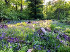 Wandering Through The Bluebell Wood In Ashridge Disney Films, Disney S, Gabriella Wilde, British Countryside, Live Action, Wander, Natural Beauty, Cinderella