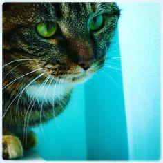 Cat, Green eyes. Kat. Mila