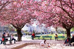 Complete Guide to Blossom Season in Paris |The Glittering Unknown