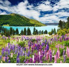 """""""Lake Tekapo, New Zealand"""" - Travel stock photos available on Fotosearch.com"""