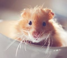 Hamster in a cup!