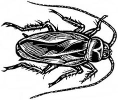 Cockroach (Top View)