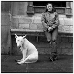 English bull terrier chilling after the Poodle Peace Parade.