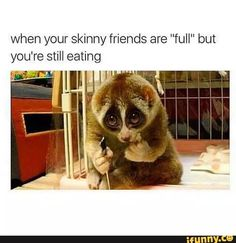 A slow loris would not need to. A slow loris when threarened leaks a special sweat from its arms. When combined they give the slow loris a toxic bite Primates, Baby Animals, Funny Animals, Cute Animals, Wild Animals, Animals Amazing, Nocturnal Animals, Funny Cute, Hilarious