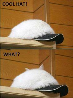 Cool hat!  It has ears !?!