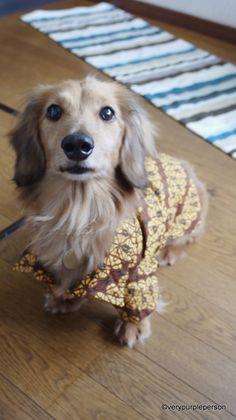 Duff's dogwear by Novita Estiti | Project | Sewing / Pets | Kollabora