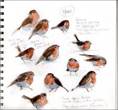 Excellent studies of Robins Watercolor Journal, Watercolor Bird, Watercolor Paintings, Sketchbook Inspiration, Art Sketchbook, Bird Drawings, Animal Drawings, Watercolor Techniques, Art Techniques