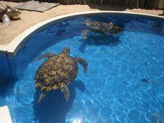 Conheça o Projeto Tamar, em Ubatuba. A unidade da cidade é uma das 23 bases espalhadas pelo Brasil. O programa é dedicado à conservação da marinha. Quem for ao espaço poderá encontrar sete tanques com 31 tartarugas – incluindo os animais filhotes.