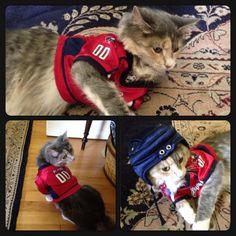 Via katierose310 on Instagram:  Enjoy this picture of my #capscat #minimartel #CapsPets