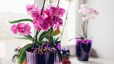 Na jaře se probouzí všechny rostliny, včetně oblíbených a jemně krásných orchidejí Orchid Roots, Moth Orchid, Orchid Plants, Leafy Plants, Water Plants, Tropical Plants, Types Of Mulch, Types Of Plants, Hortensia Hydrangea