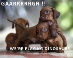 Playing Dinosaurs by Crusoe the Celebrity Dachshund, via Flickr