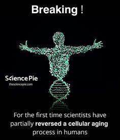 Human Evolution, Aging Process