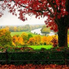 Spectacular Places: Richmond Park in London, UK Richmond Park, Richmond Hill, Windsor, Autumn Scenes, Green Landscape, London England, Richmond England, Yorkie, Places To See