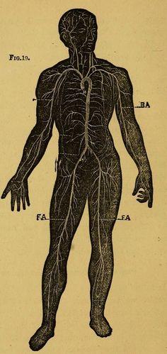 Illustrated Anatomy