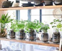 セリアのメイソンジャーでハーブ栽培!キッチンにオリジナルのハーブガーデンを♪