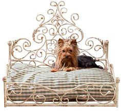 French Iron WHITE SCROLL Dog Pet Cat Bed Victorian Antique Fleur de Lis European * Find out more details by clicking the image : dog beds