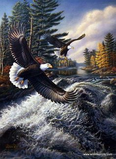 The river is getting rough up ahead and these bald eagles are snooping around in hopes of getting some good fish to eat. This print is signed and numbered with a certificate of authenticity.