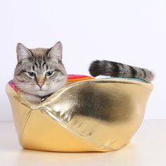 {Pot of Gold cat canoe} LOVE this.