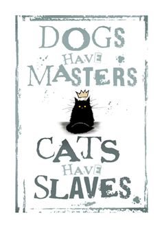mad old cat lady: Cats Have Slaves (Black) I Love Cats, Crazy Cats, Cute Cats, Funny Cats, Cats Humor, Funny Horses, Adorable Kittens, Funny Animal, Dog Poster
