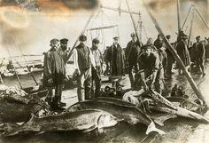 Russian fishermen take fish eggs for caviar.
