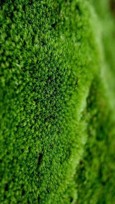 Green Nexus 5 Wallpapers HD 84