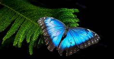 beautiful butterflies pics