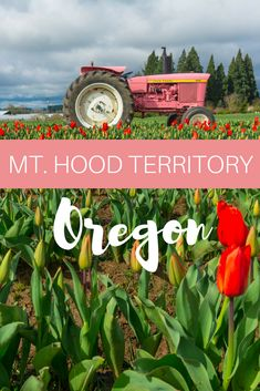 Mt. Hood Territory is a beautiful area to explore in Oregon, whether you go skiing, try out local beer, or hiking in the outdoors.
