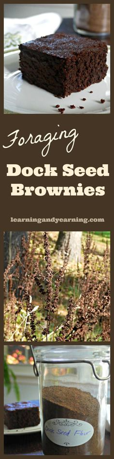 It's easy to gather dock seed, and with the tip in this post, easy to turn into flour. That flour can then be used to make these delicious dock seed brownies!