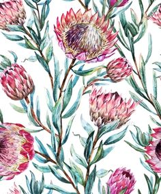 Buy Watercolor Tropical Protea Pattern by Zenina on GraphicRiver. Beautiful vector pattern with nice watercolor tropical protea flower Protea Art, Protea Flower, Botanical Wallpaper, Flower Wallpaper, Watercolor Pattern, Watercolor Flowers, Flower Patterns, Print Patterns, Australian Native Flowers