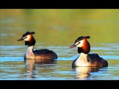 Strauss - The Blue Danube Waltz  (& beautiful video images from nature) - 2 Hours Orchestra - YouTube