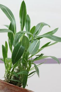 Sonnig zimmerpflanzen pflege flower gardens - Zimmerpflanzen sonniger standort ...