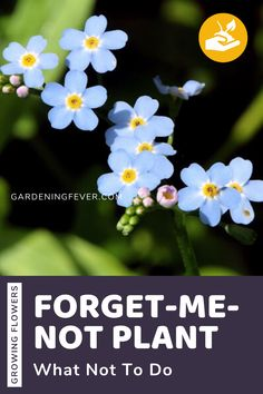 Forget-me-not plants are special plants. Its seeds can stay dormant in the soil for up to 30 years. There are some people who call them 'mouse's ear' due to its tiny size and its ear-shaped flowers. For more details and great tips check out my blog post on Forget-Me-Not Plant - What Not To Do. The best tips on gardening for beginners #plants #ForgetMeNot #gardening #gardeningtips #healthyplants #growingplants #flowers #gardeningfever Elegant Flowers, Beautiful Flowers, Cool Diy, Gardening For Beginners, Gardening Tips, Seeds Preschool, Seed Craft, Biennial Plants, Backyard Farming
