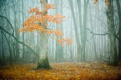 - Forest Photography by Joy St.Claire  <3 <3
