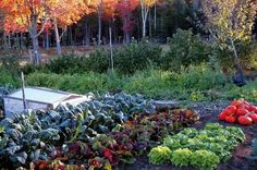 autumn vegetable garden | Fall Vegetable Garden Plants