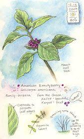 Florida Native Plant Society Blog: Keeping a Visual Nature Journal