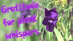 The Gratitude Minute is a moment to align yourself with your highest intention for a day at your best. It only takes a minute. I'm grateful for plant whispers. http://NurseHealer.Video