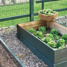Divide a small garden bed into square-foot sections, devoting each one to the number of plants that can use the space efficiently.