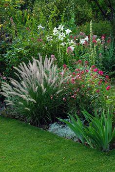 Pennisetum orientale, Centranthus ruber 'Coccineus', Rosa 'Beauty of Rosemawr', Gaura, Lilium longiflorum, Verbascum chaixii 'Wedding Candles'